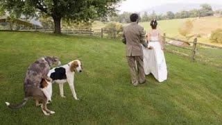 Самые смешные приколы на свадьбах!