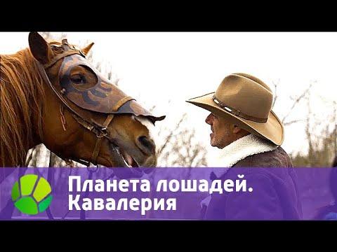 Планета лошадей. Кавалерия   Живая Планета