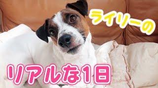 犬のライリーのリアルな1日♡~VR180~