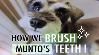 ムントくんの日課の一つ、歯磨き。動画第二弾です! My name is Munto. ...