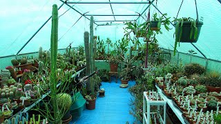 My Cactus & Succulent Polytunnel Collection Tour - Summer 2021