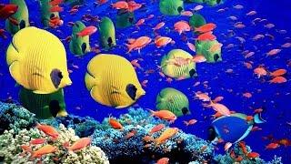 Красивый отдых - Египет. Подводный мир Шарм эль шейх