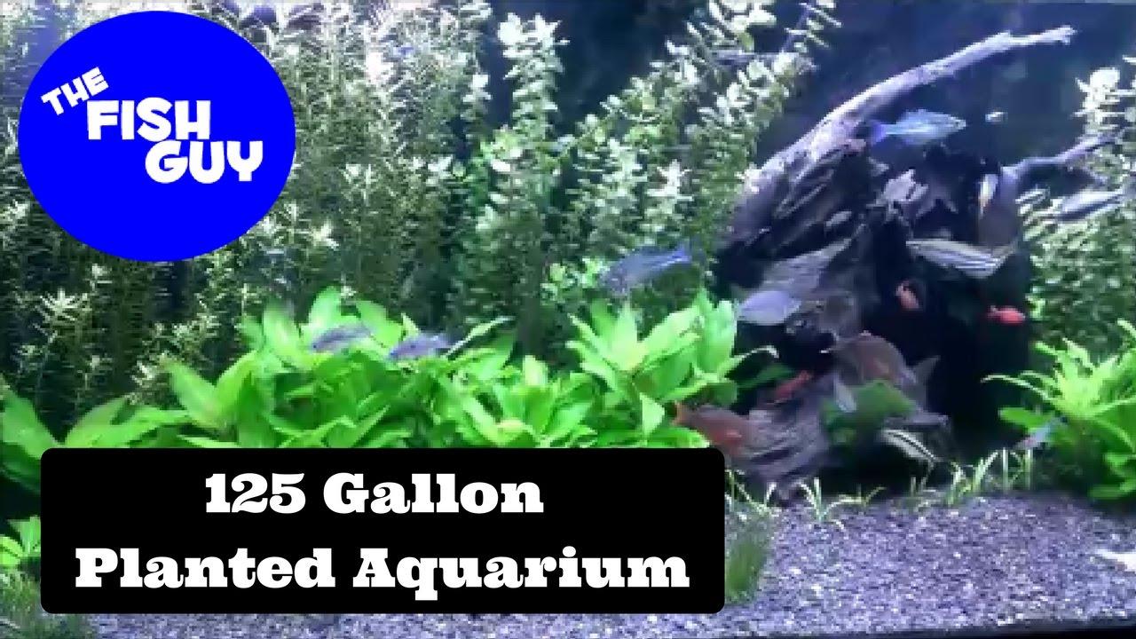 125 Gallon Planted Community Aquarium with LEDu0027s CO2 and Auto Dosing Fertilizers!!!  sc 1 st  YouTube & 125 Gallon Planted Community Aquarium with LEDu0027s CO2 and Auto ... azcodes.com
