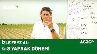 Mısırda Gübreleme Nasıl Yapılmalı / Agro TV