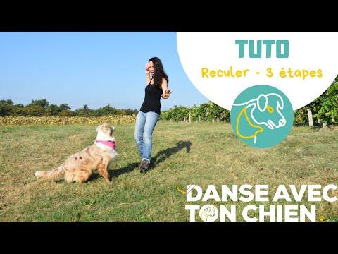 Apprendre à son chien à reculer en 3 étapes - exercice dog dancing - berger australien
