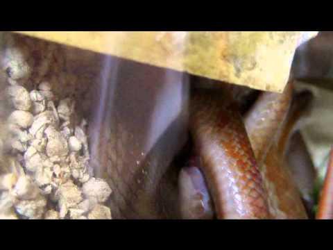 strange circus Erotic Movies Sexy18+из YouTube · Длительность: 1 час48 мин24 с