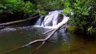 Visit Smithgall Woods State Park