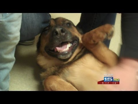 Dog lost for six months reunited with owners