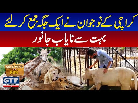 Rare Animals In Karachi   Wild Pets with Aun   GTV Network HD   13 June 2021
