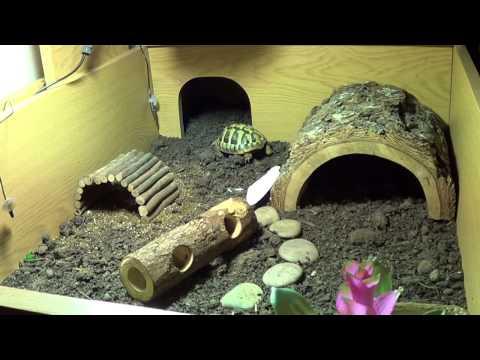 My Hermann Tortoise Enclosure