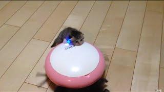 お掃除ロボから赤ちゃん猫を守る子猫