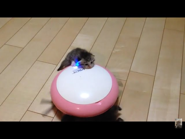 掃除機と子猫 kittens on the vacuum cleaner