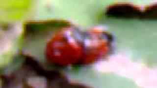 Секс в мире насекомых