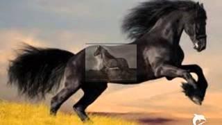 Friesen- Pferde der Nacht