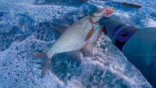 """Чертик ! Вот и первая зимняя рыбалка ! Плотва, подлещик на безмотылку """"чертик"""""""