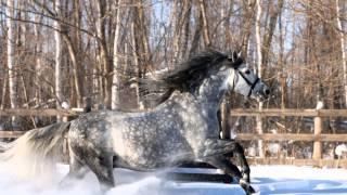 Красивое слайд-шоу о лошадях