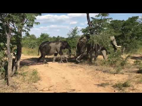 World Tour - Africa - Safari in Zimbabve