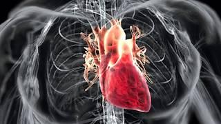 Невероятные факты о человеческом теле. Внутренние органы (Часть 3).
