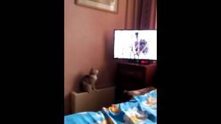 Моя кошка смотрит телевизор