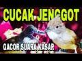 Masteran Wajib Cucak Jenggot Gacor Dan Kasar  Mp3 - Mp4 Download