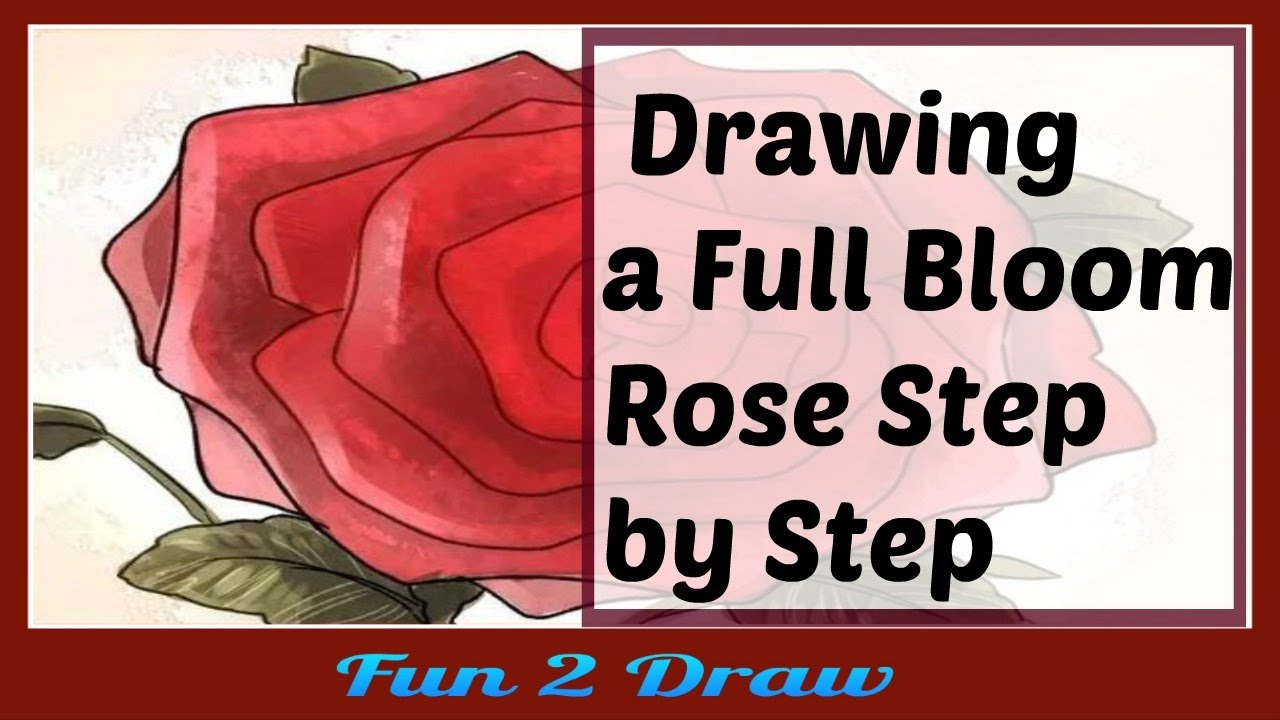 how to draw a full bloom rose