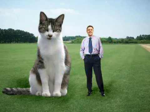 Delighful Biggest House Cat In The World 2016 Tallest Smallest