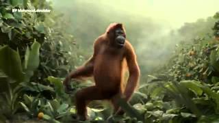 Танцующая обезьяна!!! Смотреть всем!!!