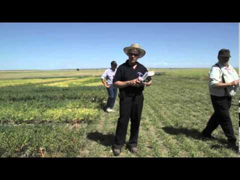 Pulse Demo - Dr. Ron Howard & Michael Harding - 2012 Farming Smarter Cypress County Field Day
