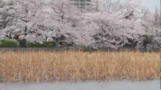 Tokyo April 2012 Part 1