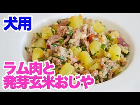手作り犬ご飯 ラム肉と発芽玄米おじや レシピ