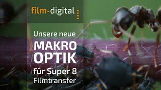 Ameisen, gefilmt mit unserer neuen Filmtransfer-Optik