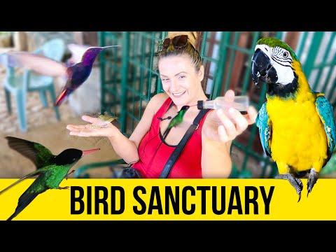Bird Sanctuary. Doctor Bird. Jamaica Video Guide.