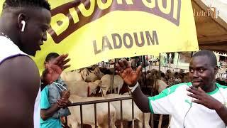 Ram Dan marchande un mouton qui coûte 900.000 fcfa
