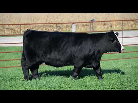 Gerdes Cattle Co 2017 Broker Bred