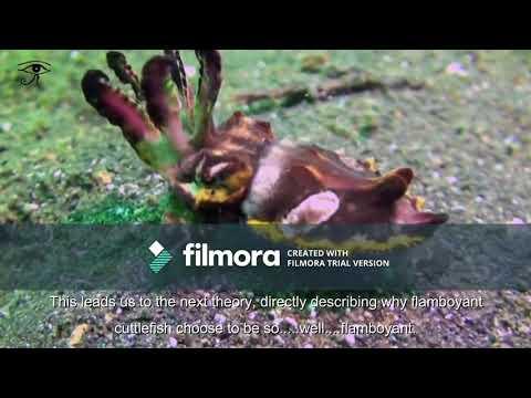 Science Ambassador Scholarship Application- The Flamboyant Cuttlefish