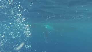 baleines au trou du lagon