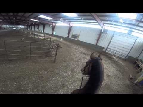 GoPro over a grid of 7 horse jumps with a 17.3 HH gelding