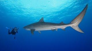 Planet Wissen - Mein Freund der Hai