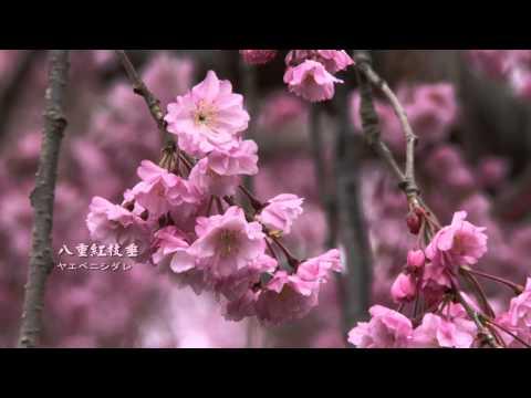 2012日本東北春之旅1 仙台榴岡公園
