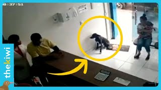 Stray dog walks into a vet clinic to ask for help