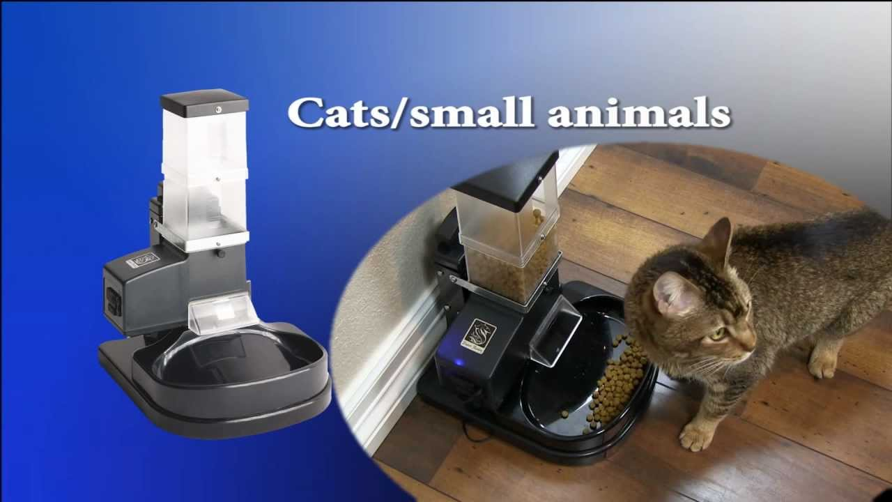 feeder cat the best timer buying meowtee blog guide automatic