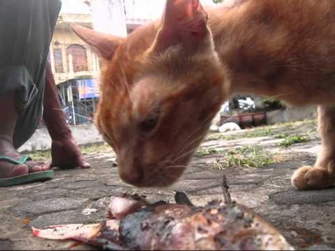 Jakarta Animal 1 Kucing Makan Tulang Ayam Padang dan Ikan Bakar BR TiVi 2277