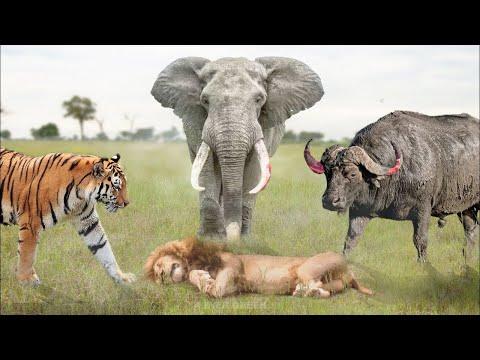 Эти Животные Легко Могут Убить Льва! Топ 10