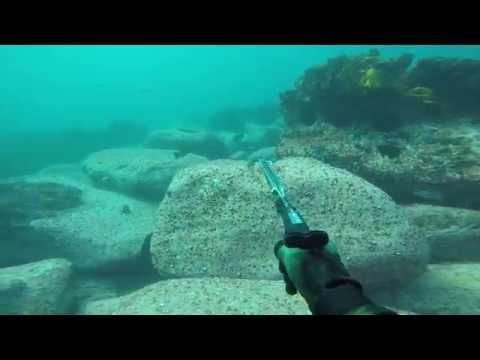 Spearfishing Jibbon March 2015