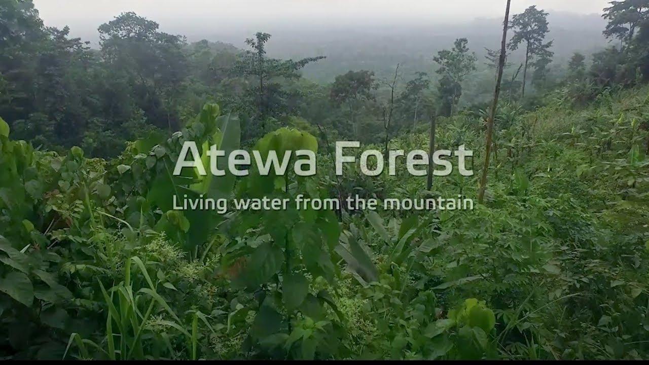 Forest kojo