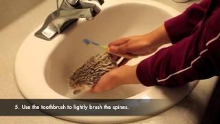 How To/How I Bathe My Hedgehog
