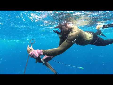 Tubarões em Cabo Verde -  Beto Pinho