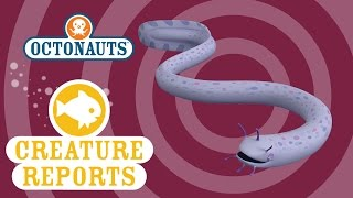 Octonauts: Creature Reports - Slime Eel