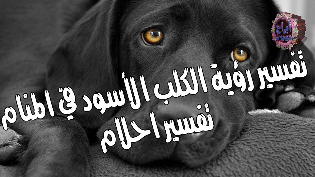 10 دلالات لتفسير حلم الكلب الأسود في المنام لابن سيرين موقع مصري