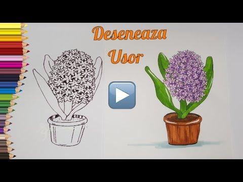 Desenez O Floare Zambila Invata Sa Desenezi Si Colorezi Floricele